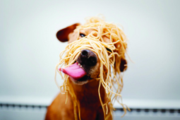 dog with spaghetti