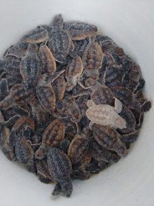 Baby Turtles web