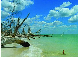 Cayo costa day image