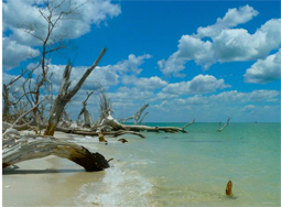 Celebrate a day of fun on Cayo Costa on Nov. 2