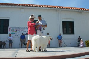 Top dog is … a big dog at the Boca Grande Woman's Club Dog Show