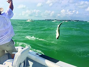 Catching quicksilver in the 2017 Ladies Day Tarpon Tournament