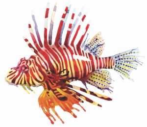 Lookin' for lionfish