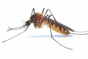 Mosquito control treatment times have changed