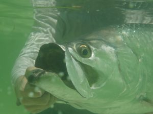 Bonefish Tarpon Trust to begin tagging in this area in August