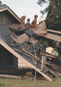 Disaster planning for residents with pets