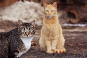 Want to help our feral cats? Give R.P . a call