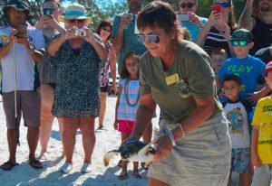 Sea turtle rescued in Boca Grande, released on Anna Maria Island
