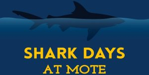 Do you love sharks?  Do your kids love sharks? Check this out