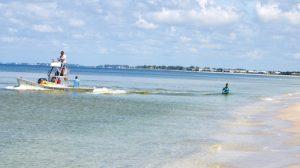Mote scientists in Boca Grande to determine snook health