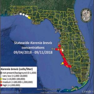 Red tide still rolls along Boca Grande beaches