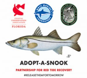CCA Florida and FWC partners to support Southwest Coast snook population following red tide event