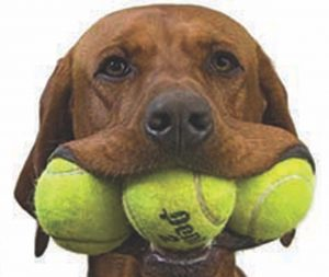 Boca Grande Club hosts party to save animal lives: The Tennis Ball