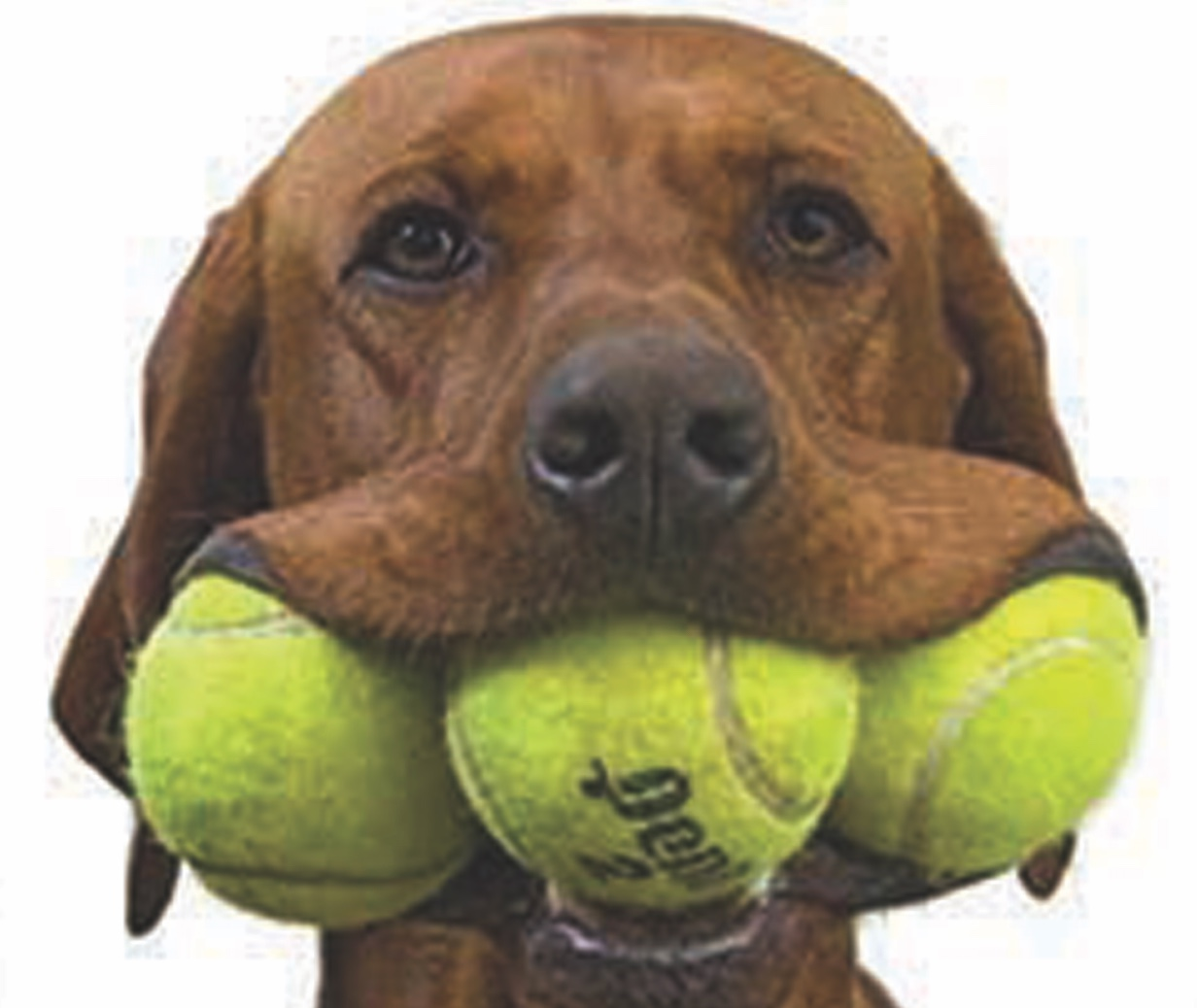 Boca Grande Club Hosts Party To Save Animal Lives The Tennis Ball