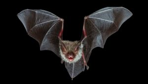Learn about bats, get ready to get creepy!