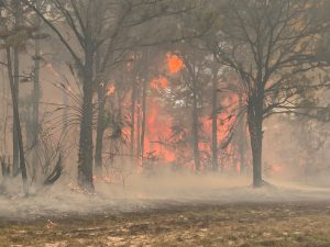Rotonda affected by wild fire