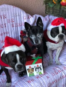 Keep those paws off the presents! Animal safety reminders for the holidays